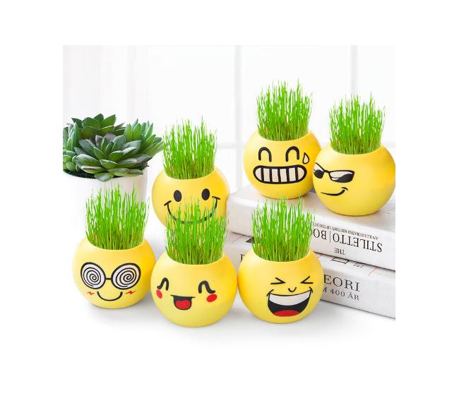 Plante en pot avec décoration